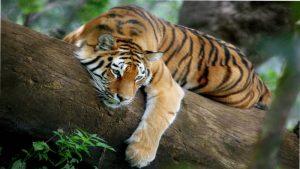 18 Days – Taj, Tiger & Temple Tour