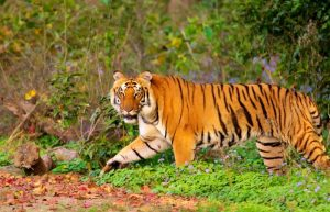 03 Days – Corbett National Park Tour
