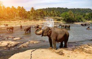 Wild life & Culture Tour of India.