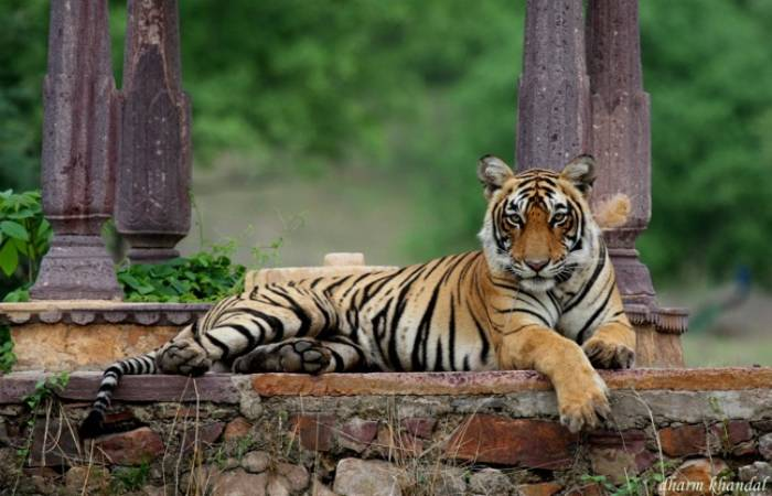 04 Days – Ranthambore Short Stay